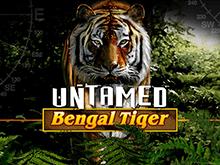 Дикий Бенгальский Тигр - слот на деньги в онлайн формате
